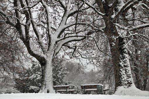 View, Tree, Snow, Mood, Black And White, Park, Winter