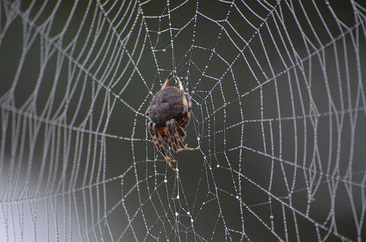 Spider, Web, Water, Mist, Bug, Nature, Insect, Creepy