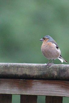Bird, Feathers, Plumage, Nature