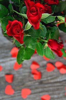 Rose, Valentine's, Valentine's Day, Romantic, Romance
