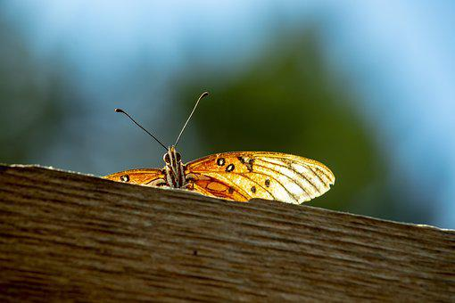 Butterfly, Fence, Orange, Rust, Blue Sky, Nature