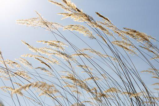 Nature, Plant, Feather, Sky, Summer, Spikes, Grass