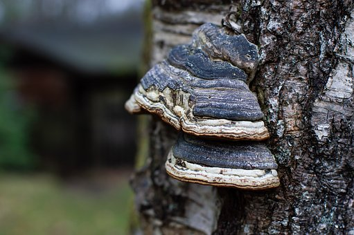 Tree, Bark, Mushroom, Nature, Wood, Trunk