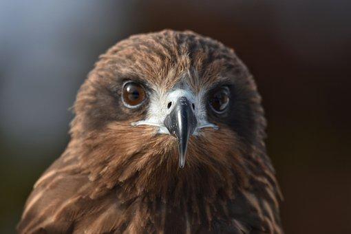 Animal, Bird, Wild Birds, Raptor, Video, Face, Eyes