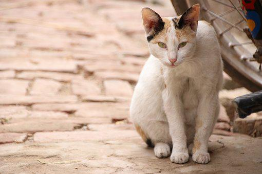 Cat, Animal, Pet, Kitten, Nature, Cute, Mammal, Eyes