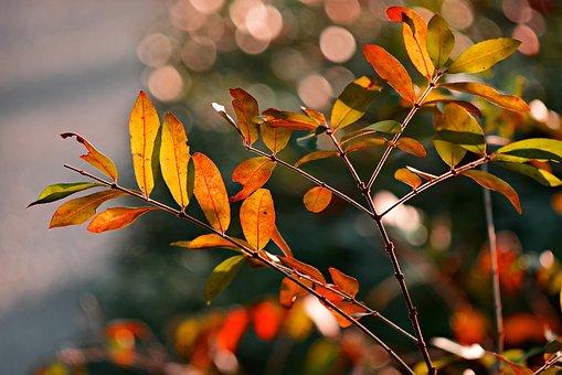 Leaf, Foliage, Twig, Branch, Tree, Autumn Color, Vein