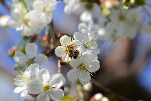Bee, Up Close And Personal, Macro, Nature