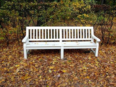 Bench, White, Park, Foliage, Autumn
