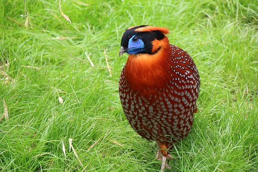 Bird, Rarely, Nature, Animal, Animal World, Feather