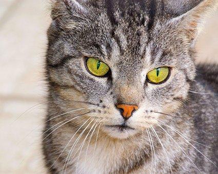 Cat, Green Eyes, Domestic Cat, Cat's Eyes, View, Animal