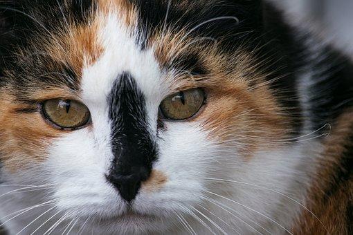 Cat, Domestic Cat, Mammal, Animal, Animal World, Mieze