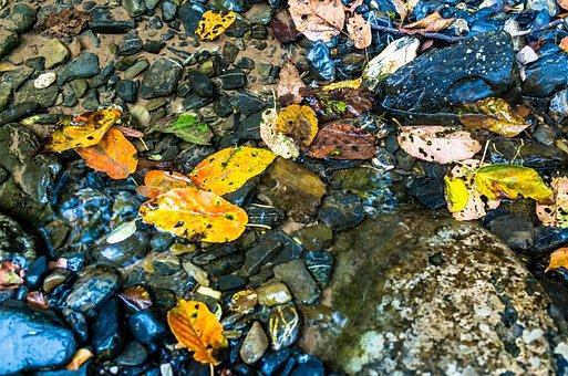 Fallen Leaves, Creek, Fall, Moss, Landscape, Flow