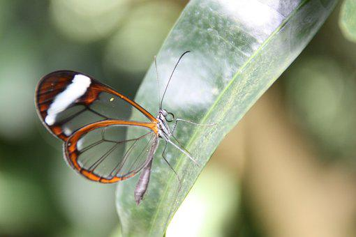 Butterfly, Nature, Insect, Wing, Flower, Close Up
