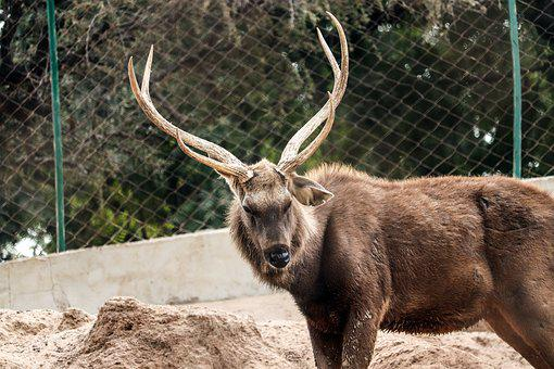 Elk, Deer, Mammals, Mammal, Wildlife, Zoo, Fur