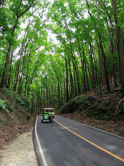 Asia, Philippines, Bohol, Made Forrest, Motorcycle Taxi