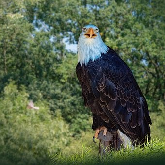 Animals, Birds, Adler, Nature, Animal World, Feather