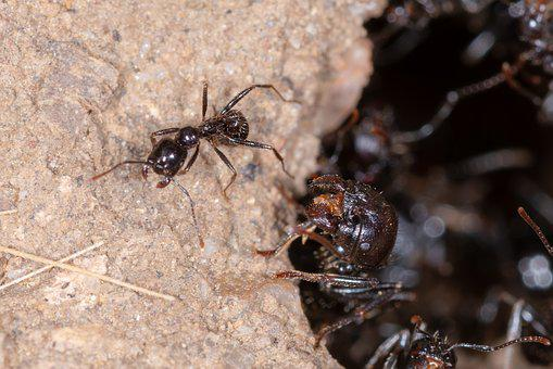 Ant, Insect, Macro, Ants, Animal, Wildlife, Nature, Bug