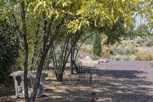 Desert Oasis, Peace, Walk, Garden