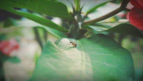 Ants, Petite, Insects, Nature, Wasp, Pests, Animals