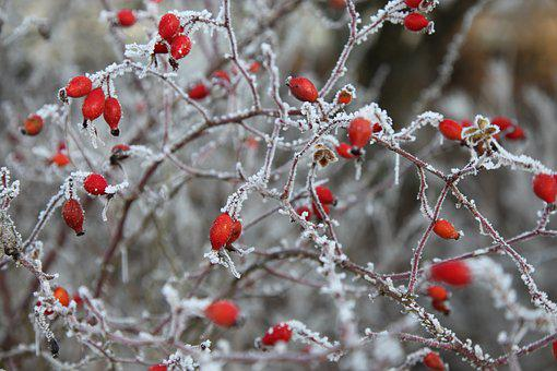 Frost, Winter, Cold, Nature, Crystals, Plants