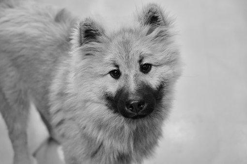 Dog, Pup, Black And White Photo, Puppy, Dog Olaf Blue