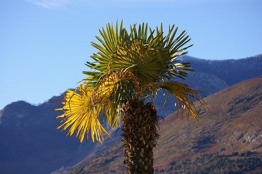 Tree, Sky, Blue, Palm, Mountain