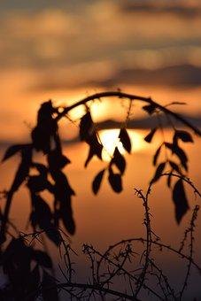 Sun, Autumn, Leaves, Sunset, Mood, Nature, October