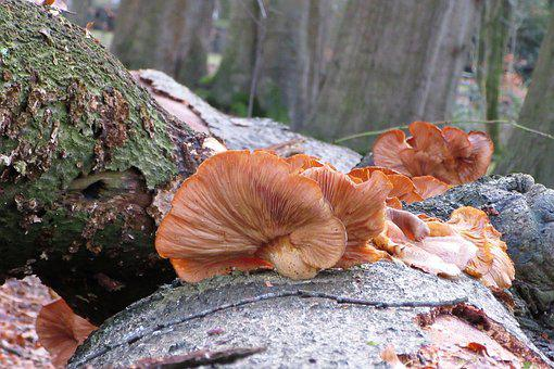 Mushroom, Tree Trunk, Moist, Forest, Winter, Bark, Tree