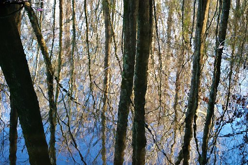 Trees, Woods, Forest, Water, Pond, Nature, Reflection