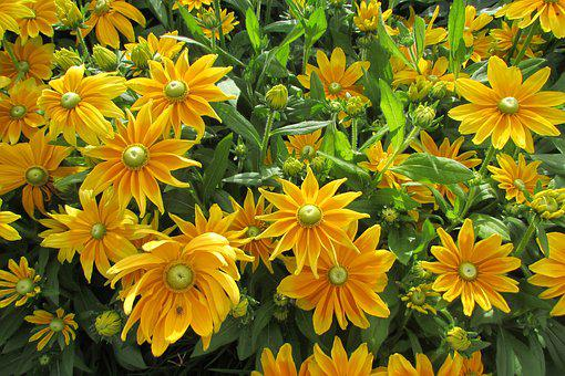 Yellow, Spring, Flowers, Nature, Bloom, Springtime