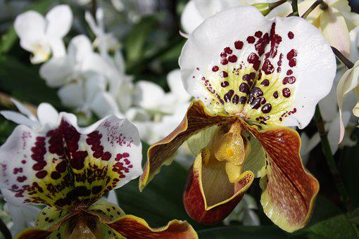 Spring, Flowers, Orchids, Flower, Petals, Botany, White