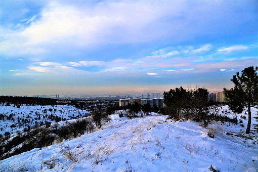 Snow, Winter, White, Nature, City, Cold, Trees