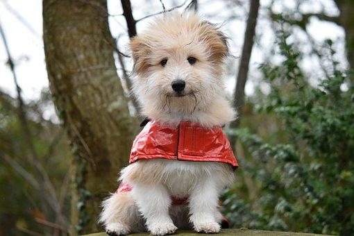 Dog, Dog Wears A Coat, Pup, Dog Look Great, Dog Ouba