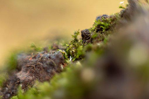 Macro, Moss, Close Up, Nature, Environment