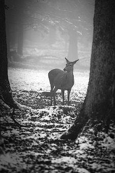 Winter, Forest, Roe Deer, Fog, Cold