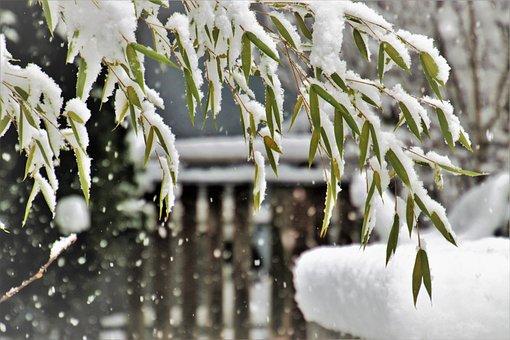 Winter, Snow, Snowflake, Frozen, Icy, White, Snowy