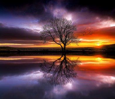 Fantasy, Landscape, Tree, Lake, Sun, Reflection, Calm