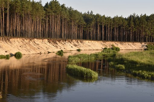 Water, River, Nature, Landscape, Forest