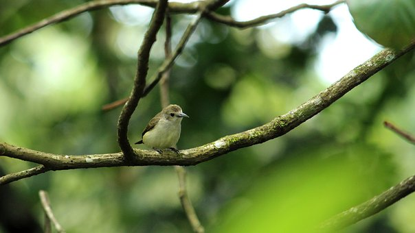 Nilgiri, Flower, Pecker, Bird, Avian, Little, Nature