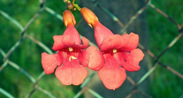 Milim Usa, Flowers, Orange, Garden, Nature, Summer