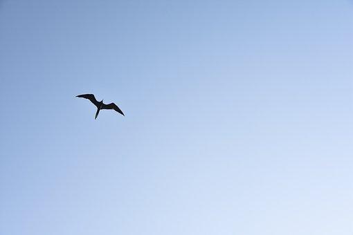 Bird, Nature, Birds, Ave, Sky, Animals, Flight, Wings