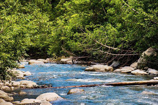 Stream, Alpine, River, Greenery, Water, Nature, Creek