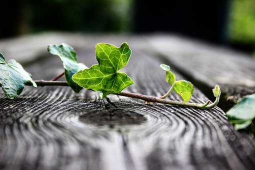 Plant, Bench, Closeup, Perspective, Nature, Outdoor