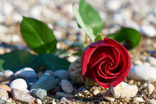 Valentine's Day, Love, Romance, Romantic, Heart, Pink