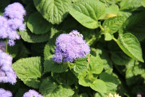 Flower, Nature, Blossom, Plant, Spring, Summer, Garden