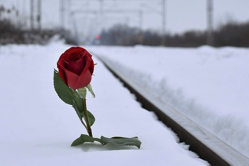 Red Rose In Snow, Lost Love, Winter, Evening, Railway