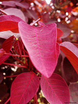 Leafs, Pink, Focus, Nature, Spring, Romantic, Love