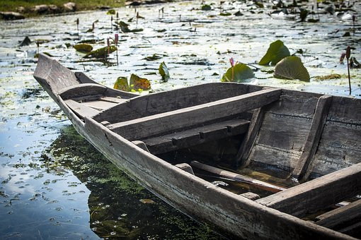 Boat, Wooden Boat, Rowing Boat, Lily Pad, Seaweed, Lake