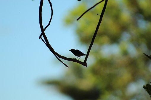 Bird, Shadow, Silhouette, Nature, Animal, Light, Blue