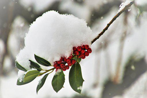 Winter, Frost, Sprig, Snow, White, Plant, Snowy, Icy